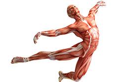fastciia--osnova-nashego-tela-mini