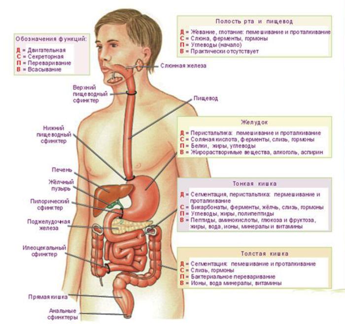 лечение от паразитов москва
