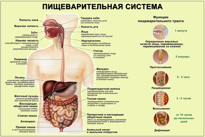 если в организме паразиты какие симптомы